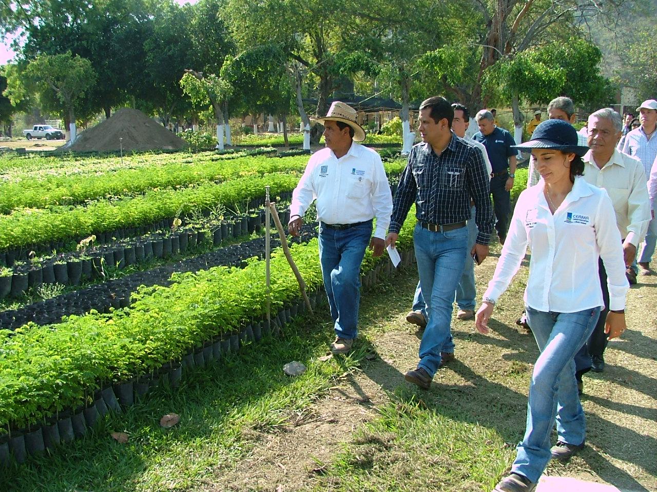 Supervisa la ceama tecnificaci n y rehabilitaci n del for Proyecto productivo de vivero forestal