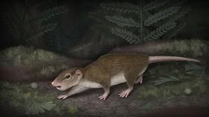 antepasado-mamifero