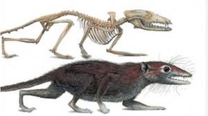 megaconus-proto-mamifero--644x362