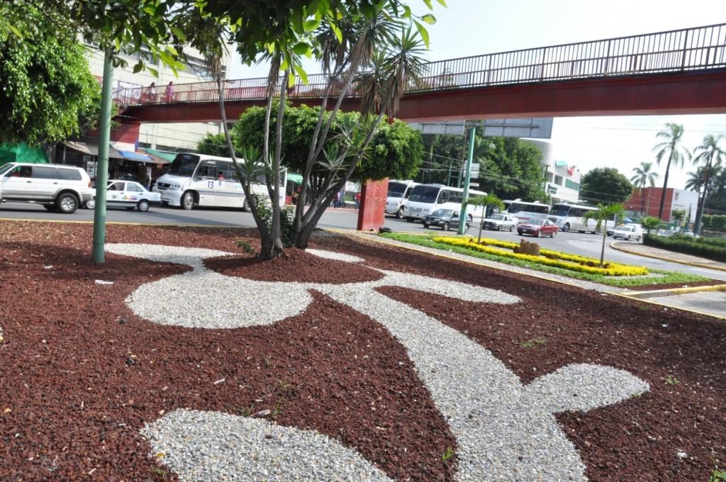 Aspectos de las Jardinera de la Avenida Plan de Ayala Frete al Seguro ( IMSS ) (4)