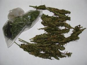 vegetal verde