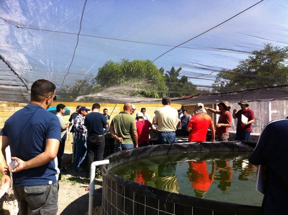 Supervisa ceagua obras del pozo los mangos en jojutla for Pozos para peces