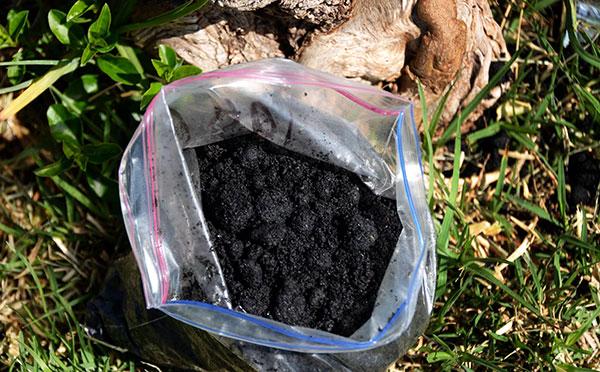 El biofertilizante nutre el suelo y captura carbono